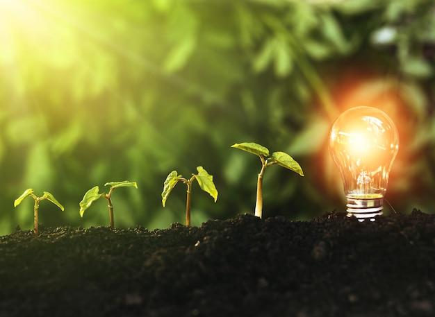 緑の植物が成長し、電球。地球の日と節約