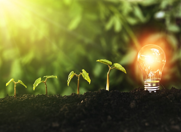 Green plants grows and lightbulb. earth day and saving
