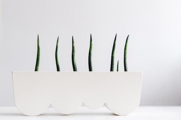 白い鍋の緑の植物