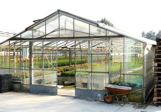 Зеленые растения в теплице промышленного размера