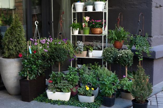 通りの花屋のテーブルに置かれた鉢植えの緑の植物。観葉植物や鉢植えの花を購入します。
