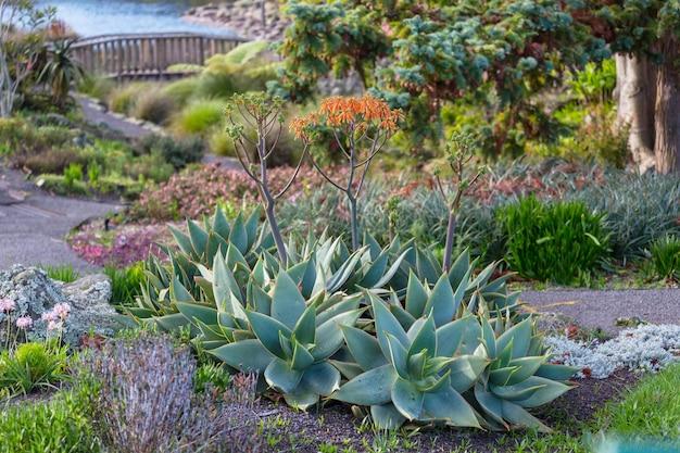 夏の庭の緑の植物