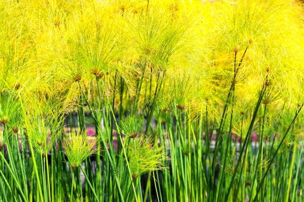 庭の緑の植物