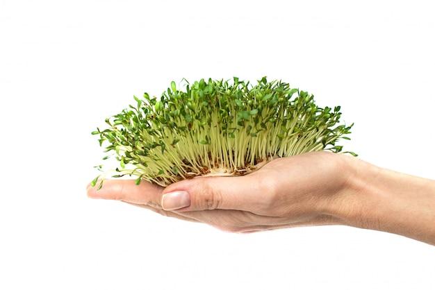 Зеленые растения в руке