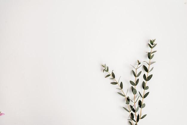 Зеленые растения на белом фоне. плоская планировка.