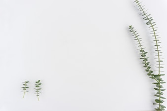 Green plants on white background