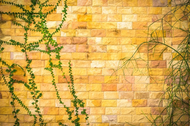 Green plants on rock wall background