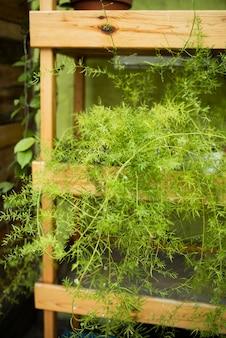 Green plants on wooden shelves