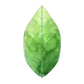 녹색 매화 잎