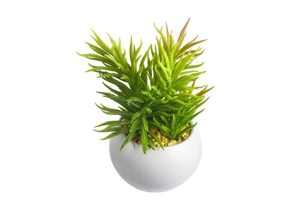 절연 흰색 배경에 녹색 화분에 심은 실내 꽃