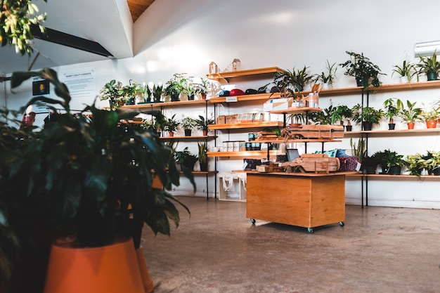 Зеленое растение в горшке на коричневый деревянный стол