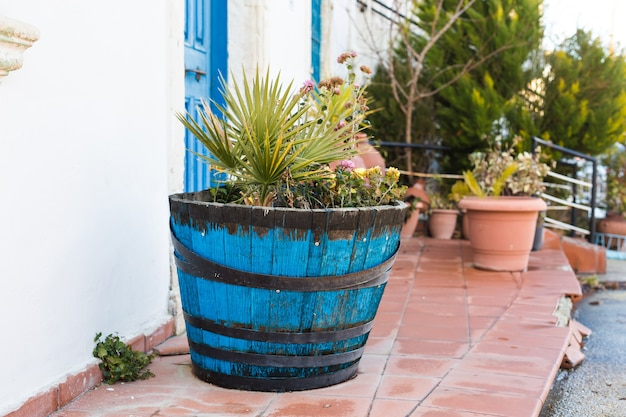 Green potted plants in front of the building entrance.