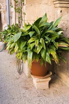 Зеленые горшечные растения в красивом горшке на открытом воздухе