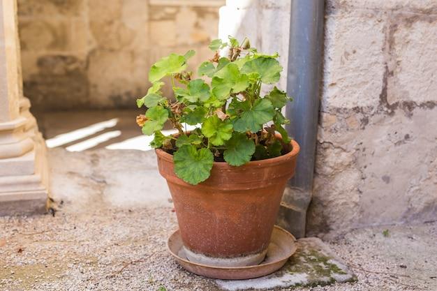 屋外の美しい鉢に緑の鉢植え。
