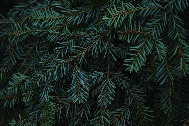 毛皮や松の緑のとげのある枝