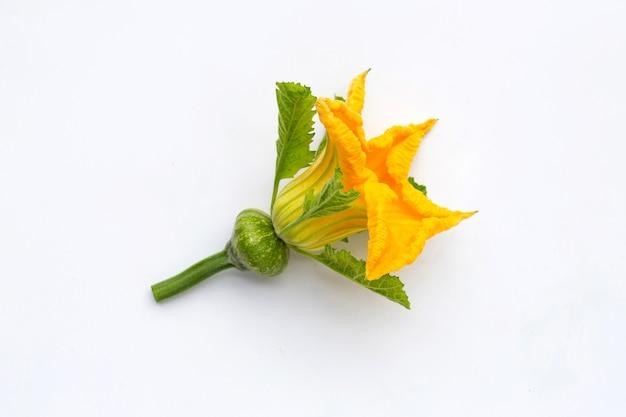 白い背景の上の赤ちゃんの果実と緑のカボチャの花。