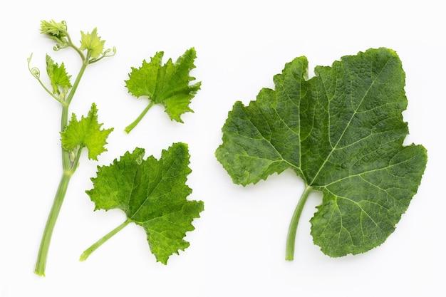 녹색 호박 흰색 바탕에 나뭇잎.