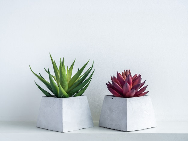 Green and red succulent plants in modern geometric cement planters on white wood shelf on white