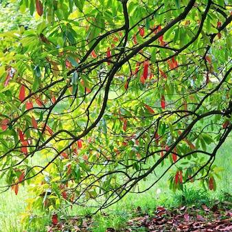봄 도시 공원에서 녹색-빨간 나무 단풍