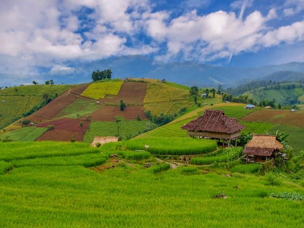 Green rice during the rainy season at thailand. pa bong piang rice terraces at chiang mai
