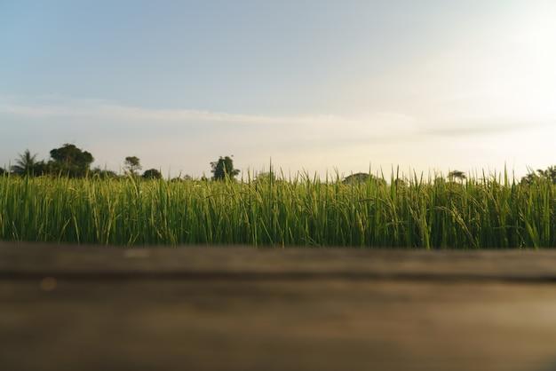 Green rice field from balcony