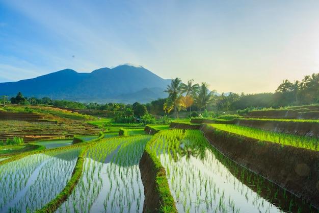 朝の太陽の風景と朝の緑の田んぼ