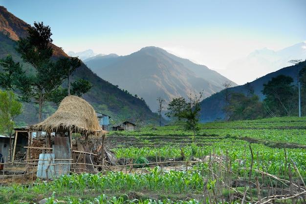 Green rice fields landscape in nepal hills.