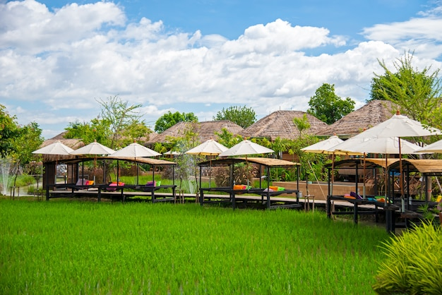 Green rice fields planted in a resort. the rainy season in saraphi district, chiang mai province thailand..