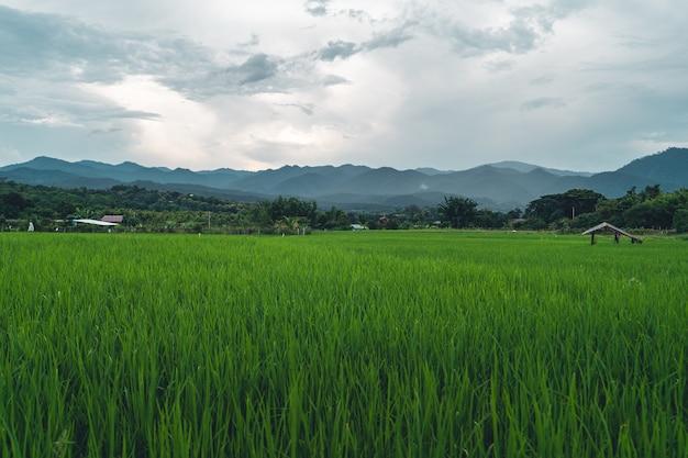 緑の田んぼ田んぼ、田んぼ、山の景色