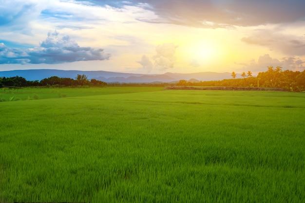 空と雲が美しい水田の緑の稲苗山に沈む夕日