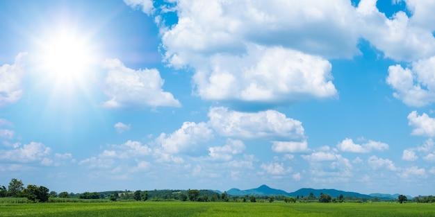 空と雲が美しい水田の緑の稲苗
