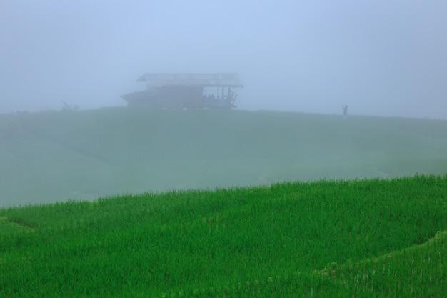 Green rice terraces on holiday at pa bong paing village,  mae-jam chiang mai, thailand