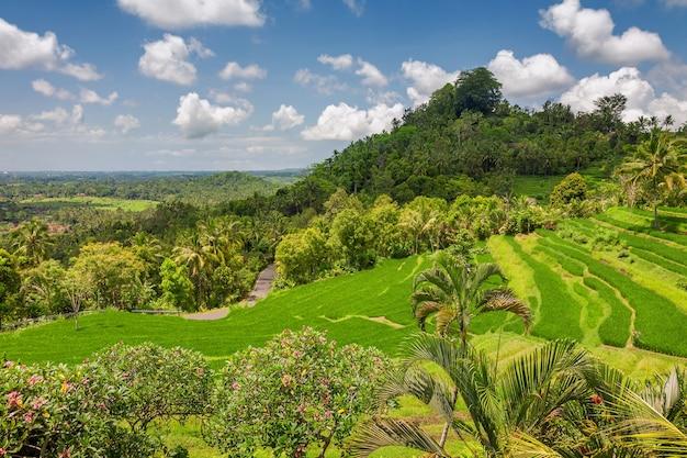 우붓, 발리, 인도네시아에 가까운 녹색 라이스 테라스 Jatiluwih 프리미엄 사진