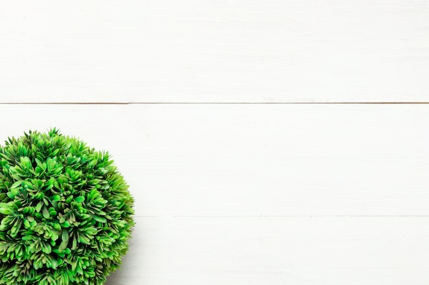 Green round bush on white background