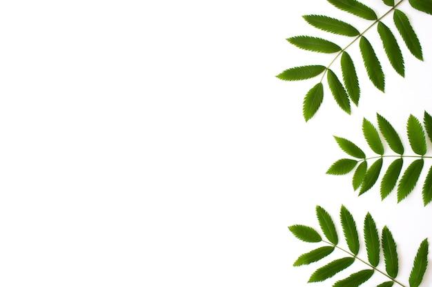 녹색 완 잎 흰색 절연