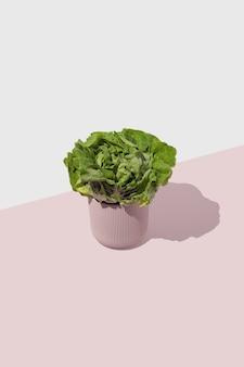 白とパステルカラーの背景にピンクの花瓶のグリーンサラダ。最小限の食品コンセプトスタイル。