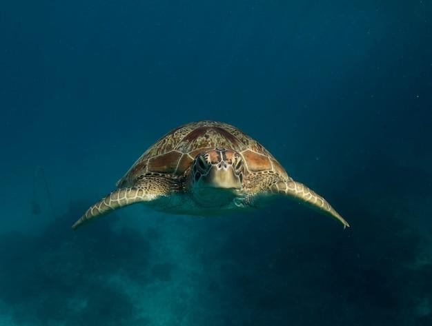 Зеленая морская черепаха в море