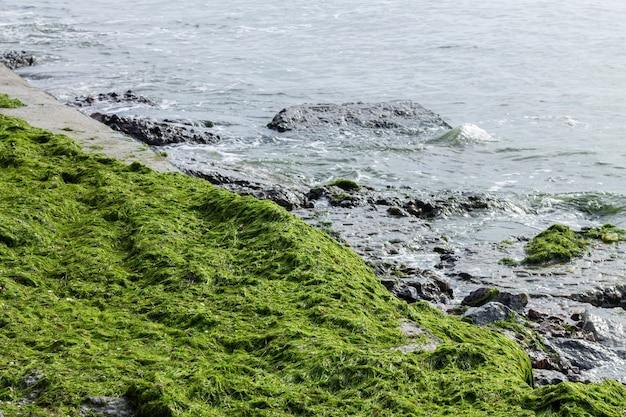 Зеленые водоросли на пляже побережья океана