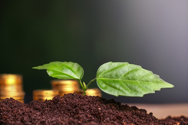 Green seedling growing from coins in the soil.