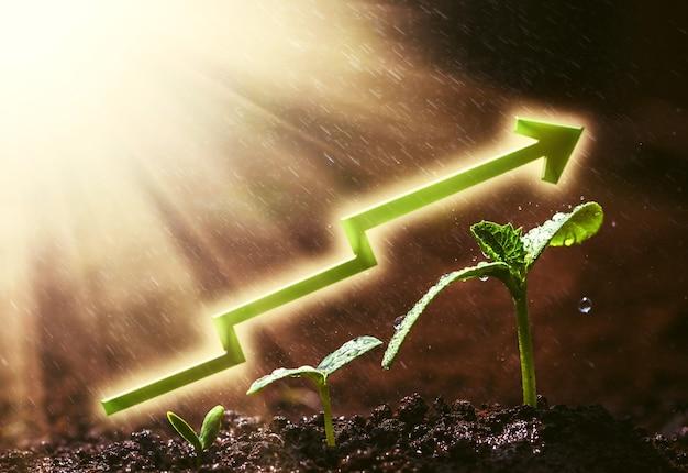 雨の中で地面に生えている緑の苗。仕事用