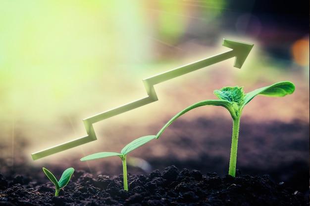 Зеленый саженец, растущий на земле под дождем. для бизнеса