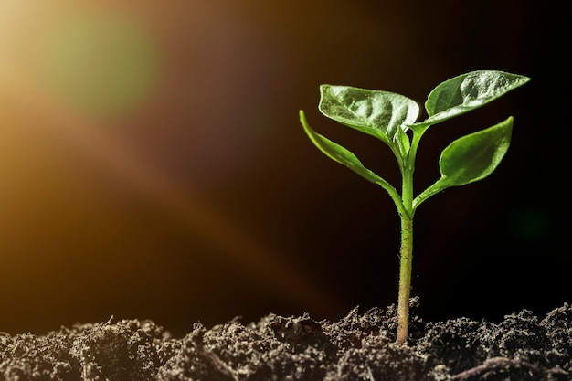 雨の中で地面に生えている緑の苗