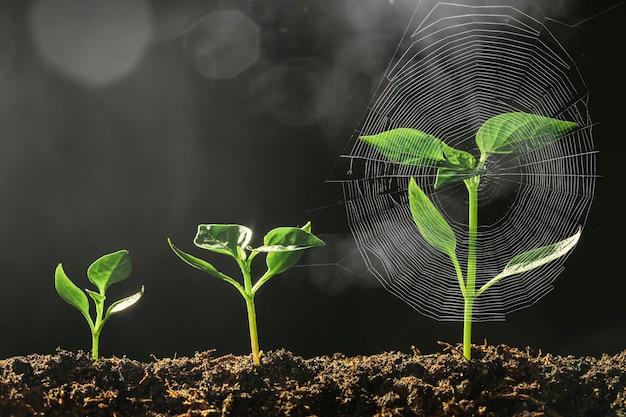 빗속에서 땅에 자라는 녹색 묘목