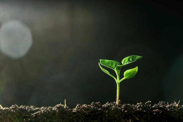 Зеленый саженец, растущий на земле под дождем