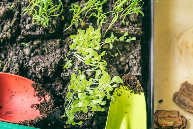 Зеленая рассада растет из почвы