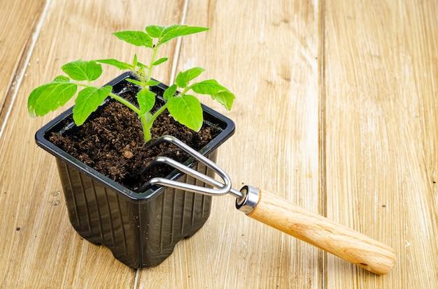 苗容器の地面で育つトマトの緑の苗