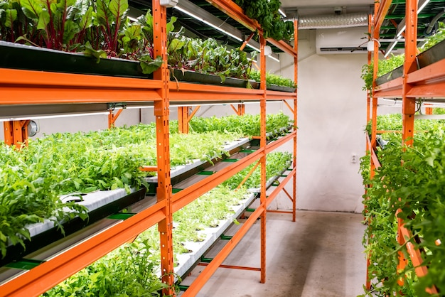 Green seedlings of various kinds and sorts of vegetables growing on large shelves inside greenhouse