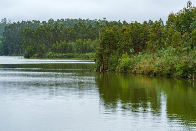 갈리시아의 호수 전체 물 저수지 인공 호수 댐 encoro das forcadas의 녹색 해안