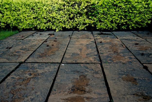 コンクリートの地面と緑の低木壁