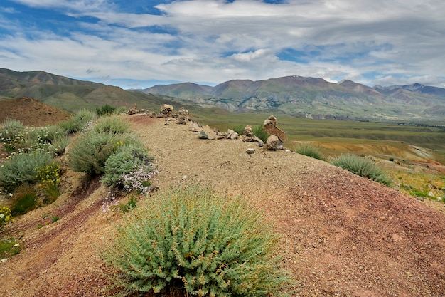 Green shrubs growing on the red-yellow desert hills. martian mountains